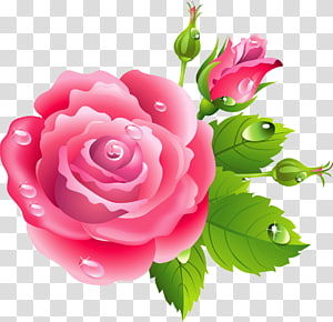 Rose Pink flowers Drawing, rose flower PNG