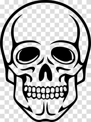 Human skull symbolism Human skeleton , skull PNG