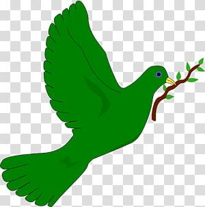 Bird Doves as symbols Common emerald dove , Bird PNG