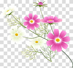 Flower , Cosmos flower PNG clipart