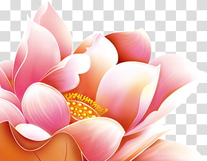 mid autumn festival decoration lotus flower PNG clipart