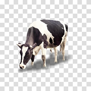 Cattle Calf Icon, Dairy cow PNG