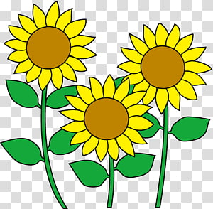 Common sunflower Cartoon , flower PNG