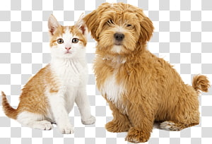 Cat Dog Puppy Kitten Pet sitting, Cat PNG clipart