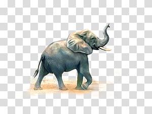 gray elephant illustration, African elephant Indian elephant, Elephant PNG