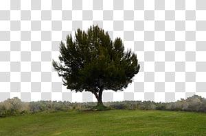 Single Tree Hill Desktop Forest, hills PNG clipart