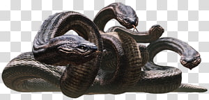 Medusa Lernaean Hydra Chthonic Echidna Greek mythology, monster PNG