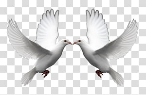 Domestic pigeon Columbidae Doves as symbols Release dove , DOVES PNG