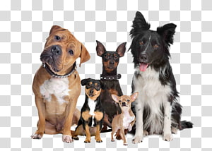five assorted-breed dogs, Labrador Retriever Puppy Cat Dog breed Dog type, A group of pet dogs PNG