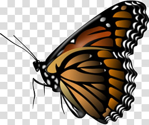 Monarch butterfly Portable Network Graphics , butterfly PNG