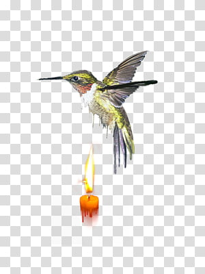 Wing Insect Fauna Feather Hummingbird M, insect PNG