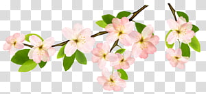 Spring Branch , pink cherry blossom flower illustration PNG clipart