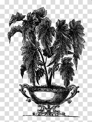 Victorian era Flowerpot Houseplant Indoor Plants Garden, plants PNG