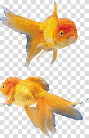 ディスワン高崎矢中店 Tropical fish , VK PNG clipart