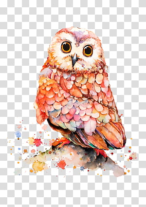 pink, orange, and white owl painting, Owl Cartoon Illustration, Hand-painted owl PNG