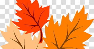 Autumn leaf color Maple leaf, autumn PNG
