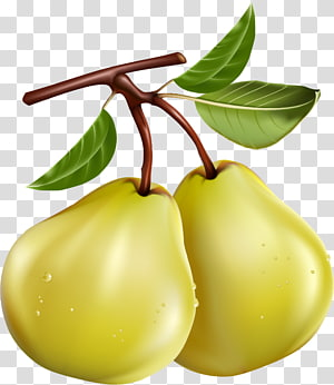 Pear Fruit Pome , pear PNG clipart