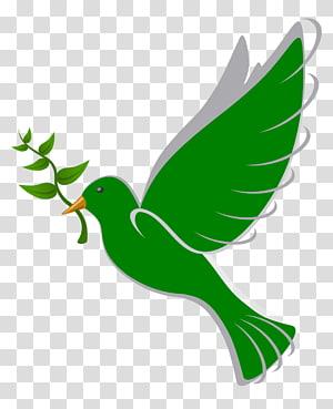 Columbidae Bird Peace Doves as symbols , Peace Dove PNG