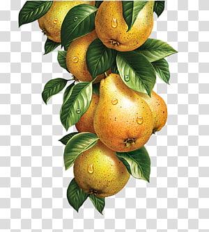 bunch of yellow fruit, Lemonade Fruit Vegetable Watercolor painting Illustration, Yellow pears PNG