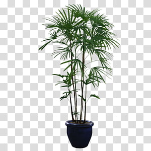 green leafed planta in black pot illustration, Houseplant Tree, Potted plants PNG clipart