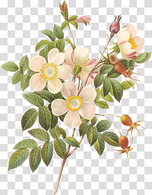 flowers flowers flowers illustration PNG clipart