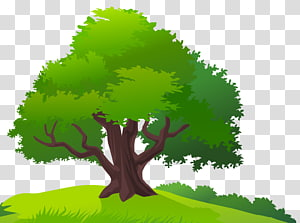 Tree , tree PNG clipart