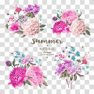 pink and white peonies , Flower illustration .xchng, Beautifully hand-painted flowers material plant PNG