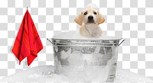 Labrador Retriever Puppy Pet sitting Dog grooming, puppy PNG