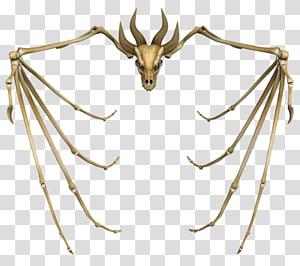 Human skeleton Dragon Skull, Skeleton PNG
