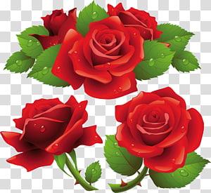 Garden roses, rose PNG clipart
