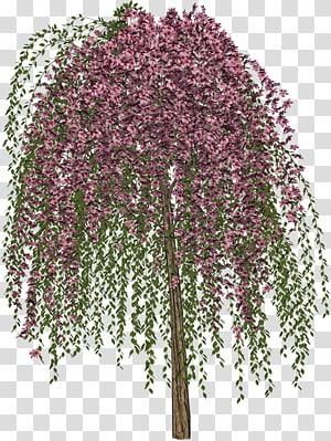 Tree Drawing, lush tree top PNG