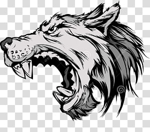 Gray wolf , wolf PNG