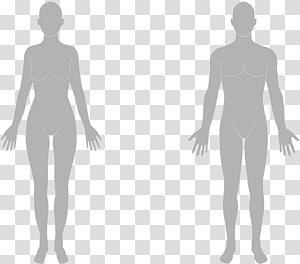 Human body Human leg Organ Homo sapiens Limb, sculpting PNG