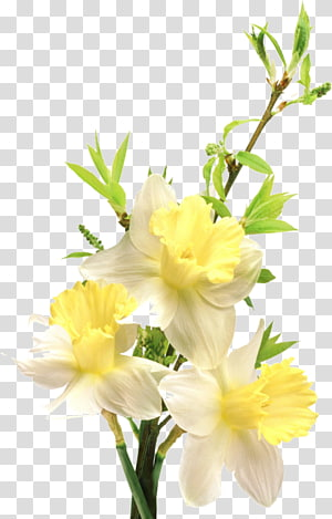 Flower , Flower Yellow PNG clipart