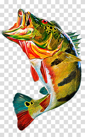 Cichla ocellaris Peacock bass Fly fishing , Fishing PNG clipart