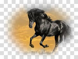 Mustang Stallion Arabian horse Gallop Friesian horse, mustang PNG