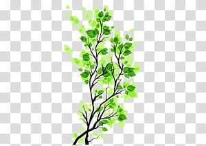 Branch Leaf, Green leaves branch Free to pull the material PNG