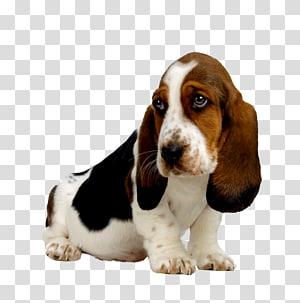 Basset Hound Puppy Beagle Basset Artésien Normand Bloodhound, puppy PNG