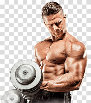 Dietary supplement Bodybuilding supplement Muscle Physical exercise, bodybuilding PNG