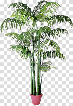 Babassu Houseplant Arecaceae Date palm, Multi Purpose Flyers PNG clipart