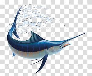 Marlin fishing Atlantic blue marlin, Fishing PNG clipart