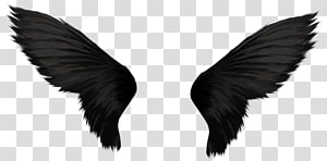 Wing , Wings PNG clipart