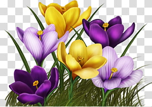 Flower Animated film , flower PNG clipart