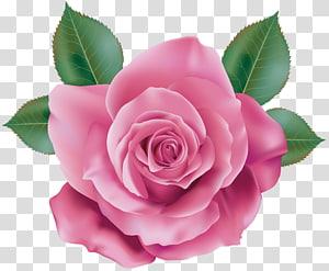 pink rose , Rose Pink Quartz, Pink Rose PNG clipart