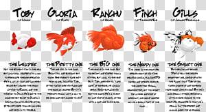 Ryukin Oranda Ranchu Common goldfish Koi, fish PNG clipart