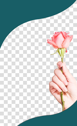Rose , Rose left hand PNG