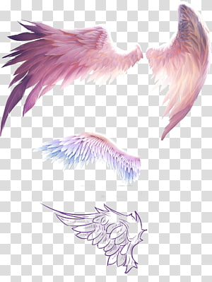 four wings illustration, Bird Flight Wing Feather, Fantasy wings PNG
