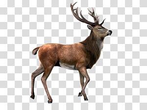 brown reindeer, Reindeer Moose , Deer With Background PNG clipart
