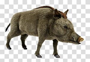 Lewa Wildlife Conservancy African bush elephant Wild boar White rhinoceros, boar PNG