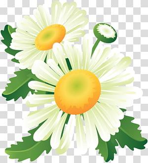 Flower Floral design , flower PNG clipart